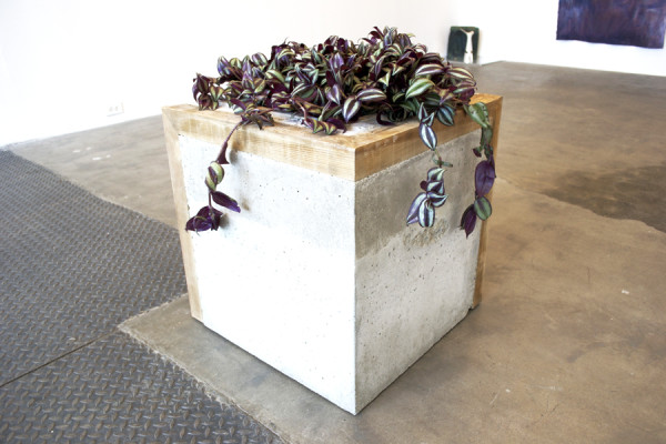 Jesse Aron Green,  Wandering Jew (Incomplete and Open, 4:1, Redux Again), 2012 Concrete, wood, dirt, plastic, and house plant,  20 x 20 x 20 inches